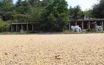 Puebla aumenta producción de café