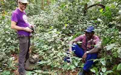 Coffea Stenophylla, la planta silvestre podrá salvaguardar el futuro del café