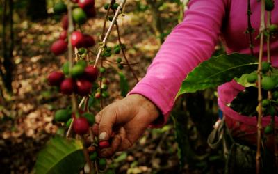 Al rescate de la denominación de Origen del Café Genuino Coatepec
