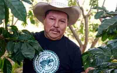 345 hectáreas de café chiapaneco con certificación Rainforest Alliance