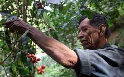 Jalisco presume sus cafés sustentables de la Sierra Occidental