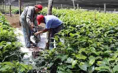 Producción para el Bienestar (PpB) apoya a casi 220 mil cafeticultores en 2021: SADER